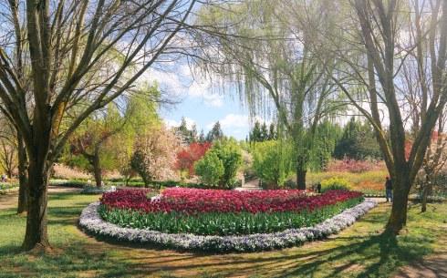 tuliptops-17