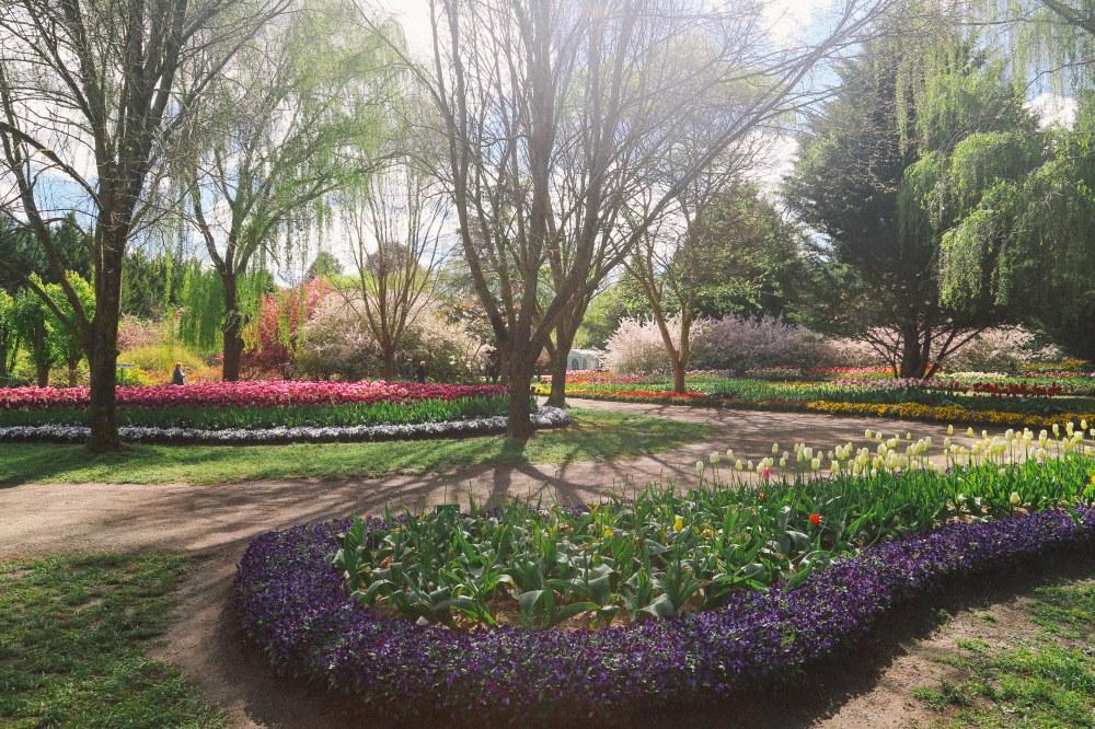 tuliptops-3